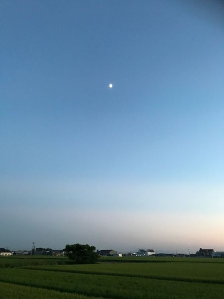 大好きなお月様❤️ Moon Field Tranquil Scene Nature Beauty In Nature Clear Sky Sky Tranquility Blue Scenics Landscape Outdoors No People Agriculture Half Moon Day Astronomy 願い EyeEm Gallery Moon Japan Love Son Hope 母