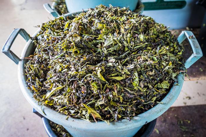 A basket of fresh tea leaves Basket Black Tea Food And Drink Fresh Fresh On Eyeem  Green Green Tea Tea Tea Leaf Tea Leaves Tea Plant Tea Plantation
