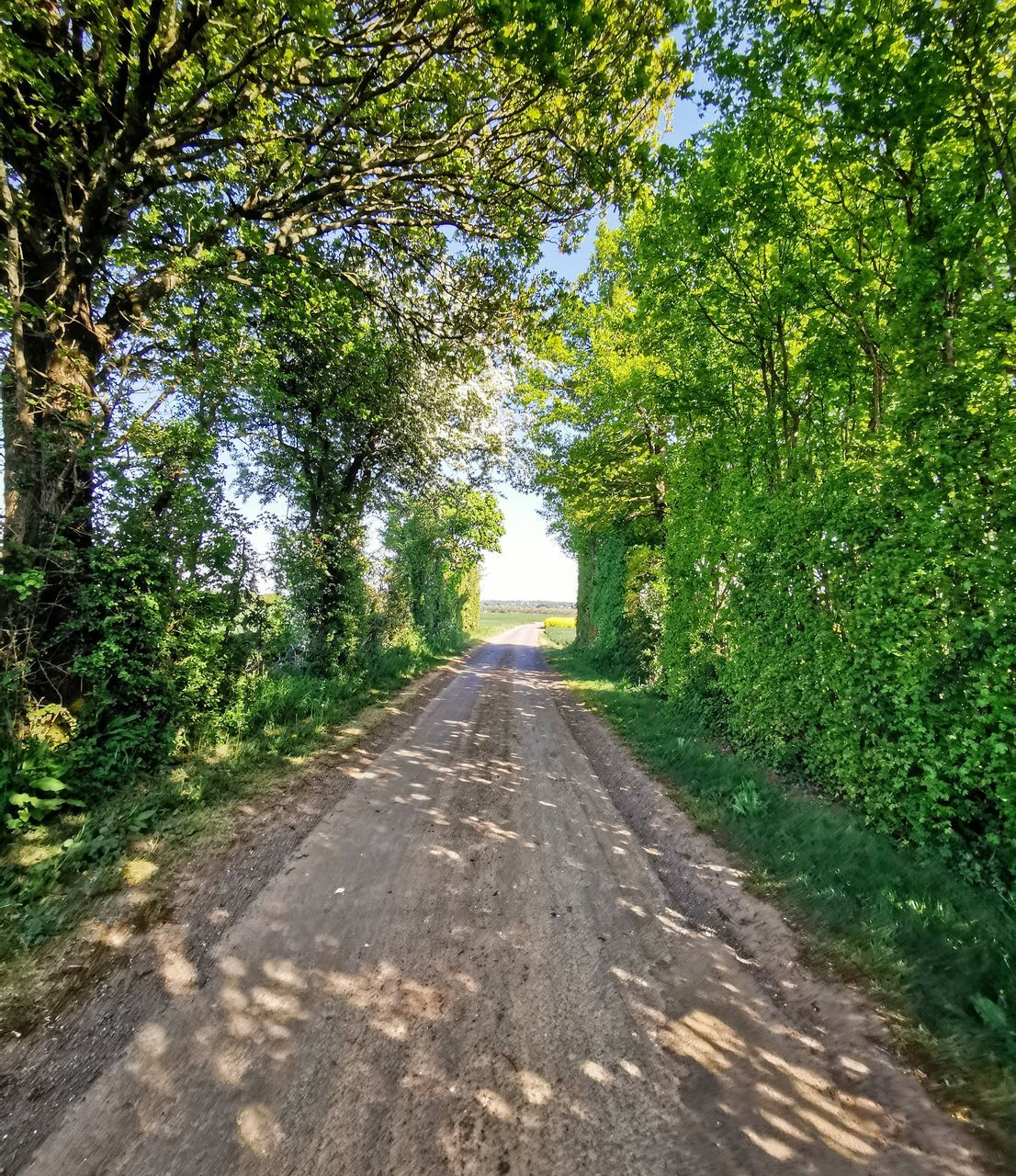 ROAD ALONG TREES AND PLANTS