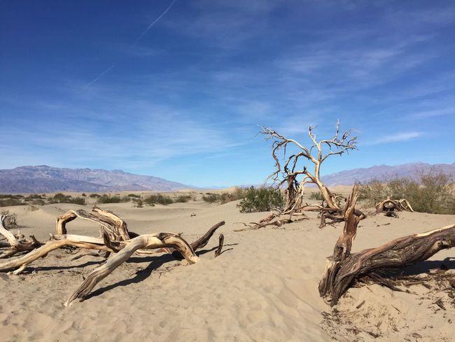 Arid Climate Beauty In Nature Blue Cloud Day Death Valley Desert Dunes Horizon Over Land Landscape Landscape_photography Mesquite Mesquite Flat Sand Dunes Mountain Mountains Nature No People Outdoors Remote Rotten Tree Rotten Wood Scenics Sky Tranquil Scene Tranquility