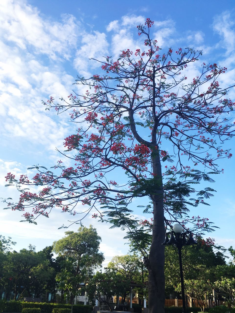 tree, sky, cloud - sky, low angle view, growth, nature, beauty in nature, day, branch, outdoors, no people, flower, fragility, freshness