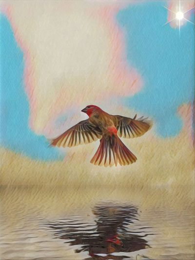 Bird Flying Animal Themes Vertebrate One Animal Sky Animal Animals In The Wild Spread Wings Nature Animal Wildlife Beauty In Nature Cloud - Sky Mid-air Motion Outdoors Multi Colored Water