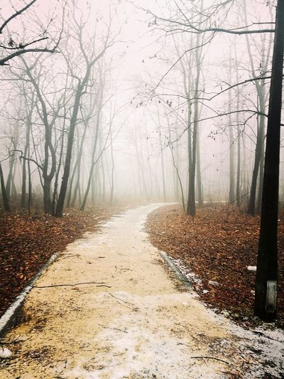 Tree Nature Fog Forest Beauty In Nature Road The Way Forward No People Outdoors EyeEmNewHere