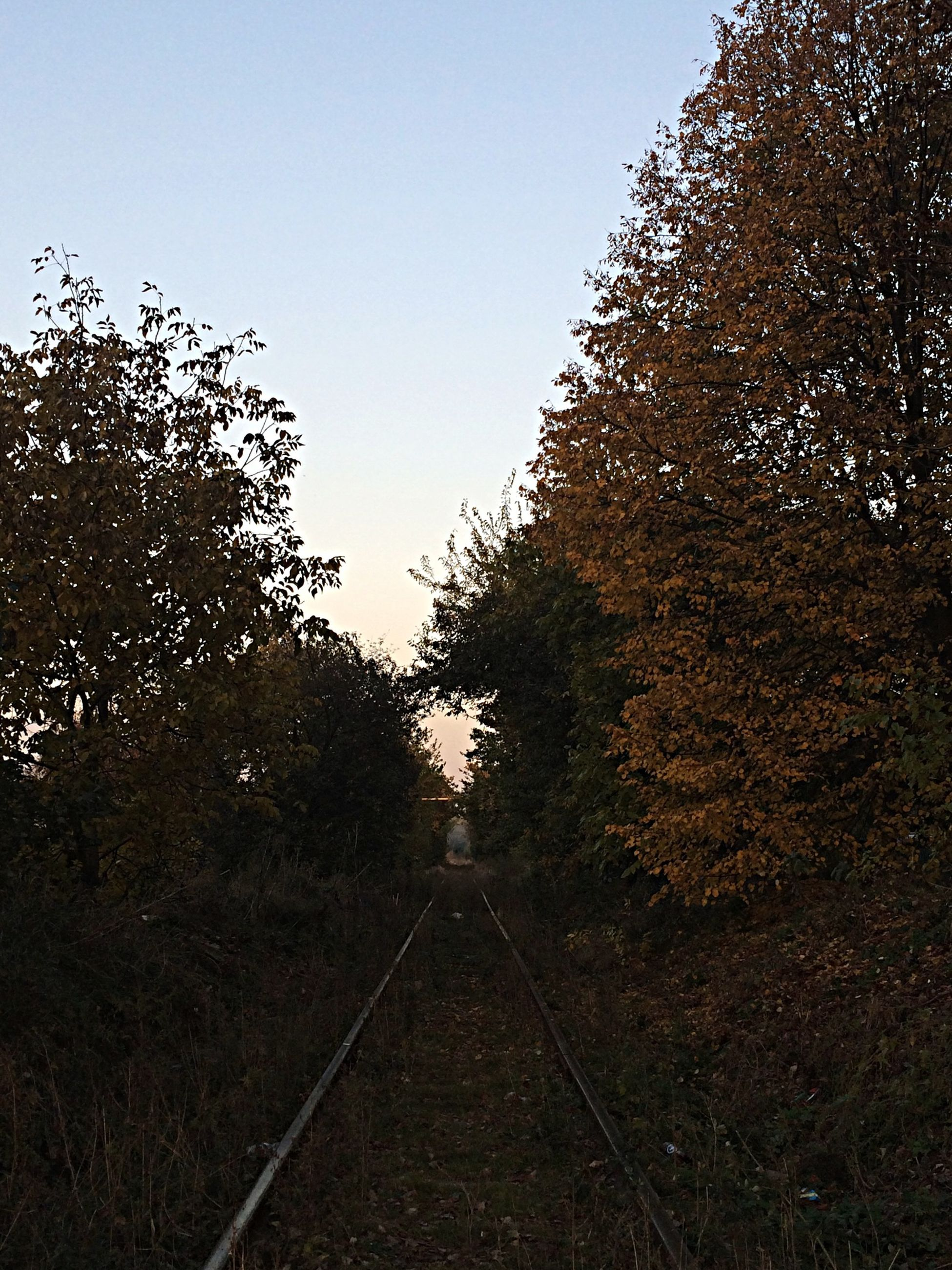 clear sky, the way forward, tree, transportation, diminishing perspective, vanishing point, railroad track, copy space, sky, tranquility, road, nature, growth, tranquil scene, outdoors, no people, rail transportation, day, landscape, long