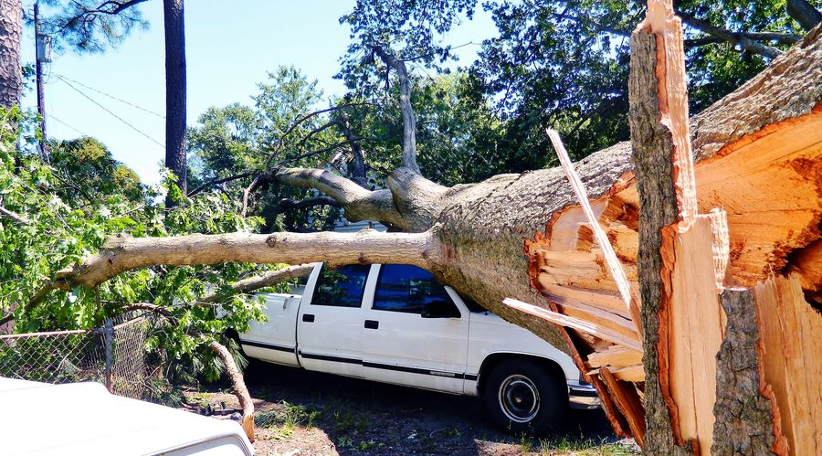 enormous tree fallen opon truck BIG Blown Down Branches Damage Fallen Ground Image Of Limbs On Car  On House Photo Of Picture Of Ripped Roots Of Tree Shots Of Split Storm Tall Torn Tornado Tree Tree Trunk Trees Wreckage Yard