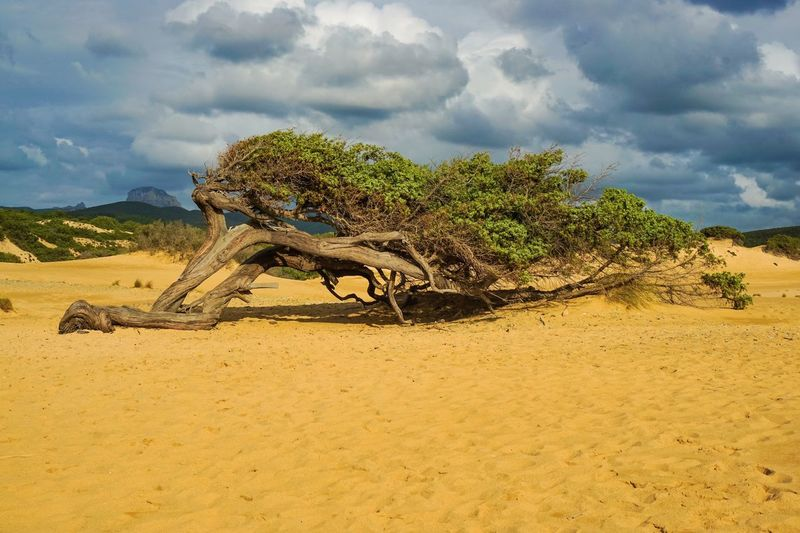 View of tree on sand against sky