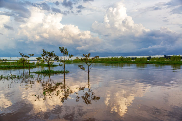 Sky and trees reflected in the Amazon River in the late afternoon near Leticia, Colombia Amazon Amazon River Amazonas Brazil Colombia Jungle Landscape Leticia Nature Outdoors Rain Forest Rainforest River Sky South America Sunset Travel Tree Trees Tropical Water