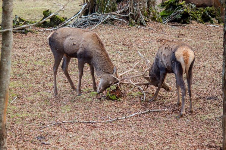 Deer Ciervo Animals
