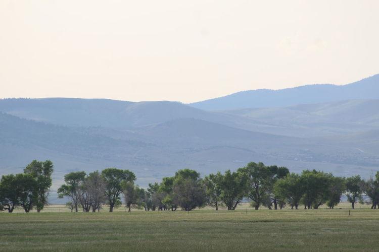 Montana 300mm