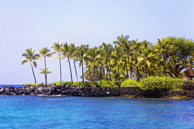 Palm Trees Growing At Sea Shore Against Clear Sky At Hawaii Islands