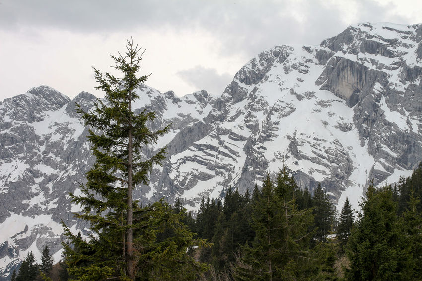 Alpine Alps Beauty In Nature Berchtesgadener Land  Cloud - Sky Cloudy Cold Temperature Day Germany High Landscape Mountain Mountain Range Nature No People Outdoors Range Rocks Rossfeldpanoramastraße Scenics Sky Snow Snowcapped Mountain Tranquility Tree