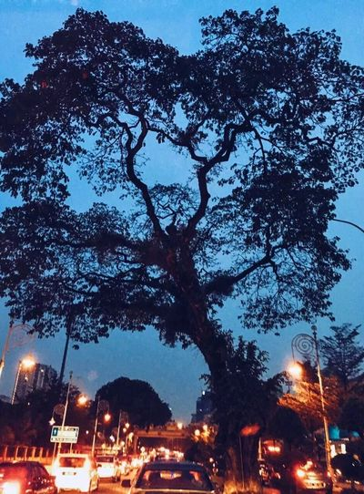 Traffic Heart Shape Tree Heart Shape Low Angle View Beauty In Nature Illuminated Night Transportation Mode Of Transport Car Building Exterior Land Vehicle City Sky Built Structure Architecture Outdoors No People Cityscape EyeEmNewHere EyeEmNewHere