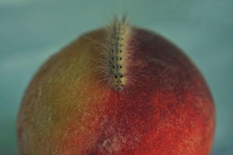Peach lover