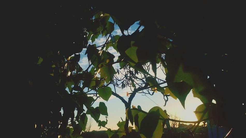 Sunrise Sun ☀ Green Nature Algoz Silves Algarve, Portugal