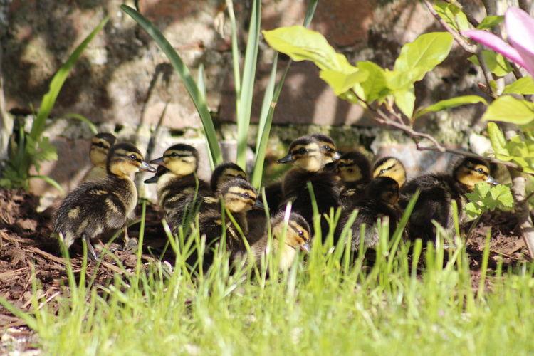 Birds in a field
