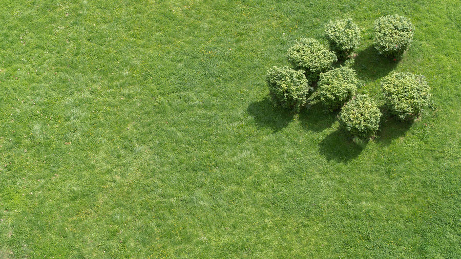 Group of small bushes on a uniform grass, view from top Beauty In Nature Day Field Grass Green Color Growth High Angle View Nature No People Outdoors Plant