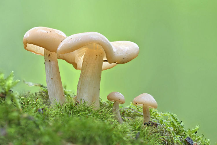 Pilze Makro Pflanzen Pilze Im Wald Pilze Fotografieren Mushroom Fungus Vegetable Plant Food Edible Mushroom Growth Toadstool Green Color Land Close-up Nature No People Food And Drink Field Freshness Grass Fly Agaric Mushroom Beauty In Nature Day Surface Level