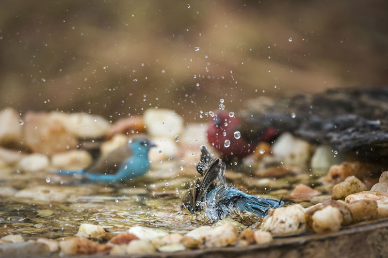 Birds splashing in water