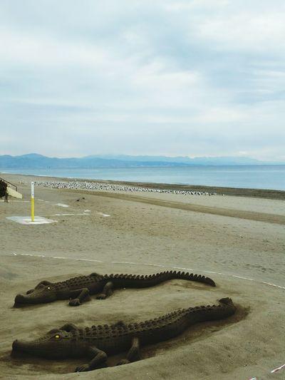Sand Crocodile Birds Seagull Beach Sea Sand Horizon Over Water Outdoors Nature Day No People Animal Themes