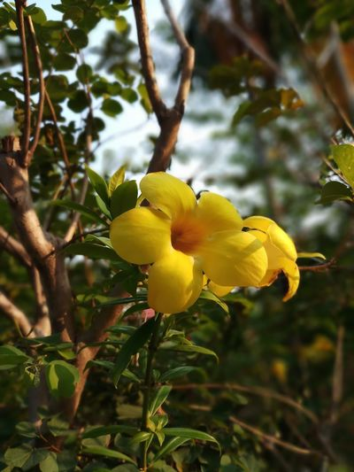 Beauty In Nature Close-up Day Flower Flower Head Flowering Plant Focus On Foreground Freshness Growth Leaf No People Outdoors Plant Plant Part Tree Yellow