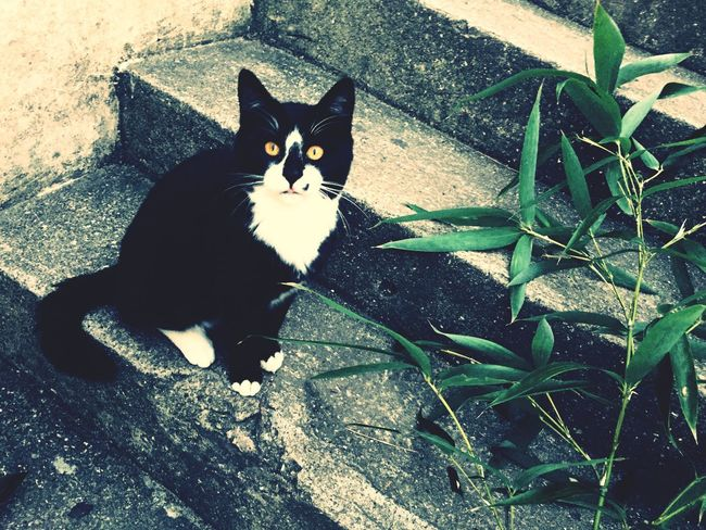 Showcase: November Streetphotography With Cat Yellow Eyes Autumn Simple Life On The Stairs