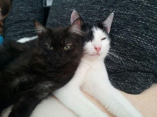 Cute Pets Cats Enjoying Life Firehype
