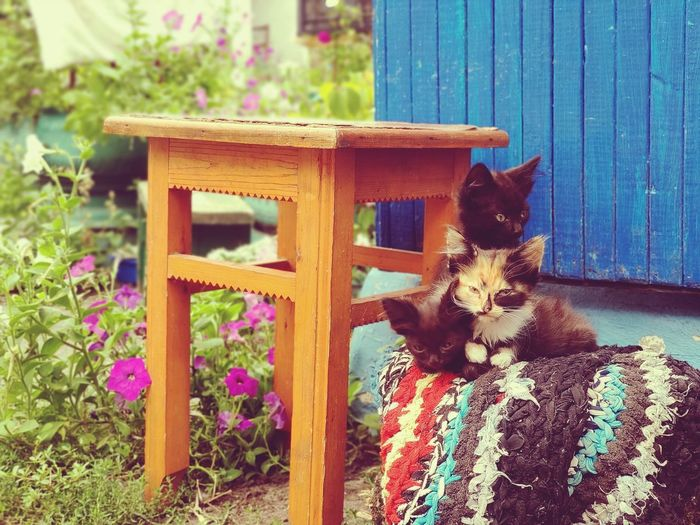 Cat sitting on wooden wall