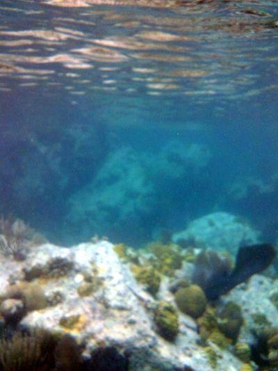 ...first time taking fotos of the reef... Taking Photos Enjoying The Sun Isla Culebra ,Puerto Rico