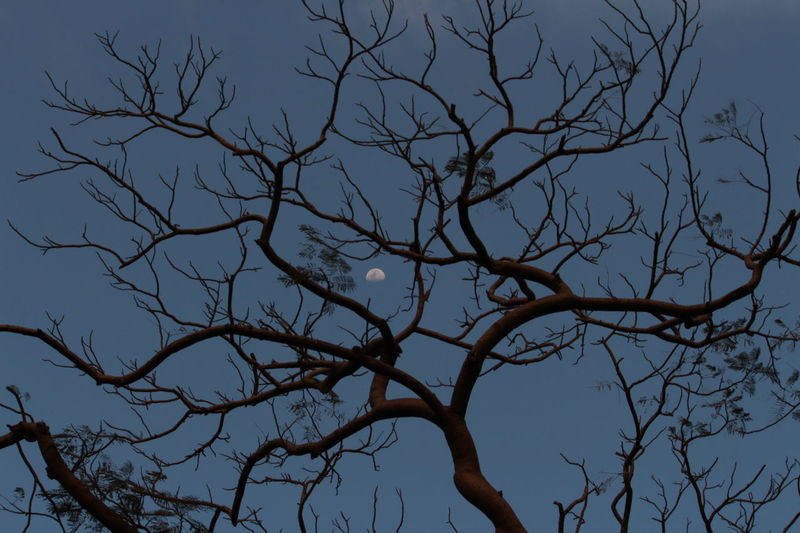 Tree No Leafs Moon Evening Sky Moody Blue Sky Passion No People Cloud - Sky Beauty In Nature Outdoors Forest India