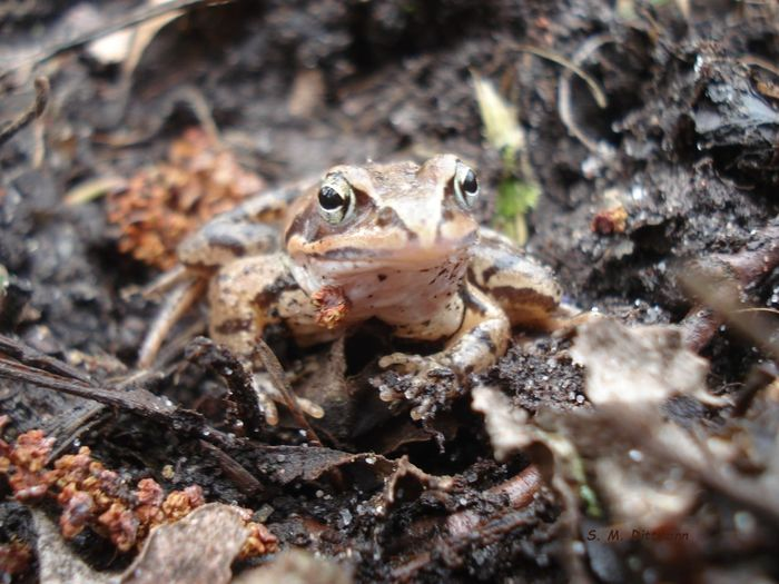 Laubfrosch Animal Themes One Animal Animal Wildlife Animals In The Wild Animal Amphibian Frog No People Outdoors Laubfrosch Frosch Amphibien