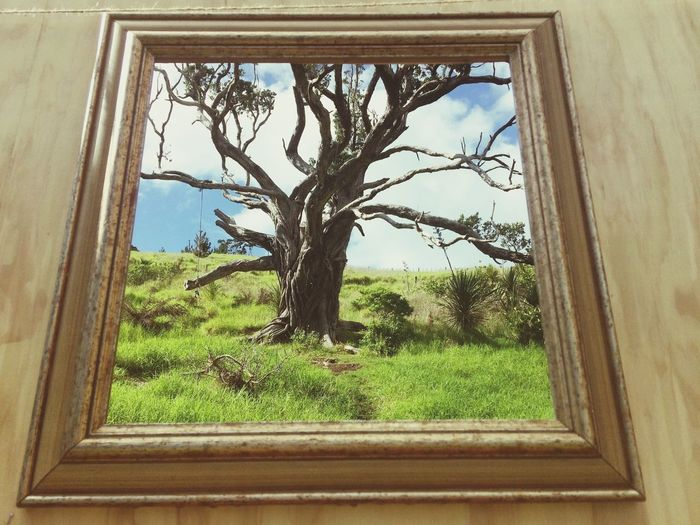 Reality double take Different Perspective Displaydesign Frommypointofview Nature On Your Doorstep Nature Photography Framed Livephotography Thisisreality Plant Glass - Material Rural Scene Green Color Sky Growth Grass Built Structure Field Window Frame