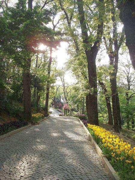 Tree Nature Day Beauty In Nature Green Color Landscape Istanbul Turkey Büyükçamlıca Travel Photography Koru