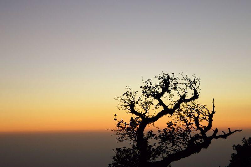 #scenery #shadesofnature #silhouette Tree Sunset Branch Backgrounds