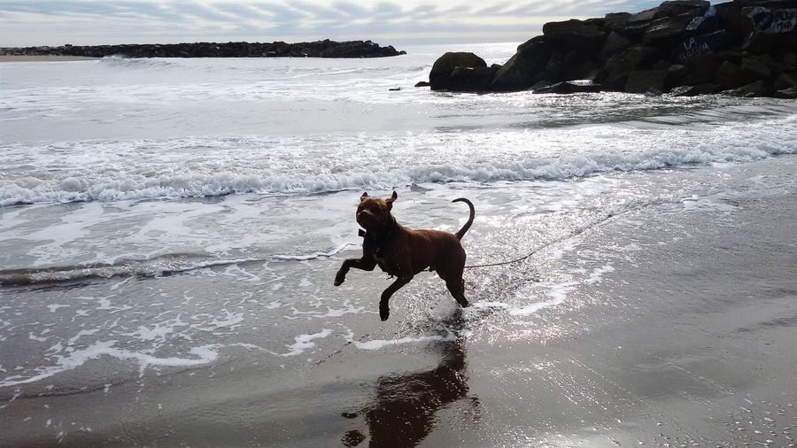 Pets And Animals Pets Pitbull Happy Happiness Beach Water
