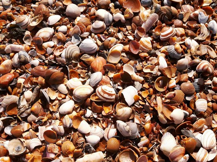 Full frame shot of seashells at beach