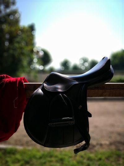 Cleaning day Equipe Blurred Horse Riding Shiny Cleaning Leather Springtime Horse Photography  EyeEm Best Shots Eyemphotography Saddle Landscape Countryside Farmland Shining Arid Landscape EyeEmNewHere