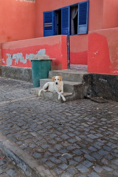 Streetlife cabo verde Travel Photography Cabo Verde The Week on EyeEm This Week On Eyeem Streetphotography Streetlife Mammal Domestic Animals Pets Animal Animal Themes Domestic Vertebrate One Animal No People Architecture