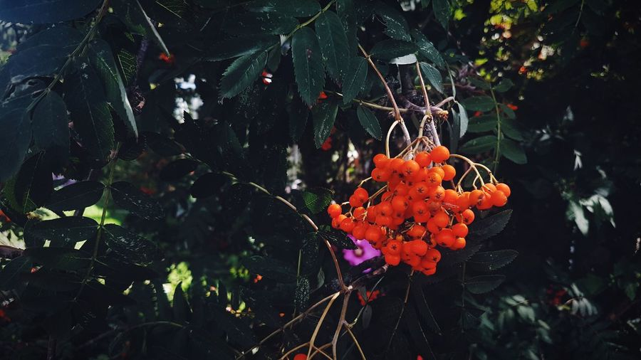 Outdoors Nature No People Day Close-up Beauty In Nature Plant Flower Fragility Growth Freshness Plant Green Color Leafs Photography Leafs Greenery Tranquility EyeEmNewHere Orange Color Purpleflower Purple Color Orange Fruit The Week On EyeEm