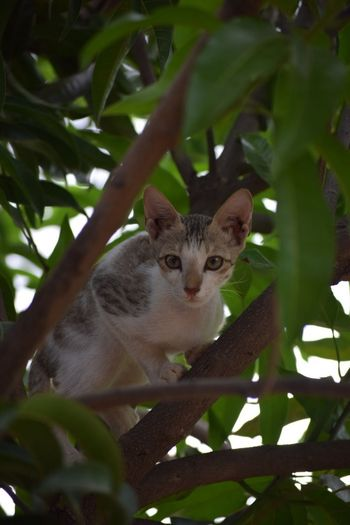 Looking At Camera Mammal Domestic Cat One Animal Portrait Animal Themes Tree Leaf No People Feline Pets Sitting Nature Day Outdoors The Week On EyeEm