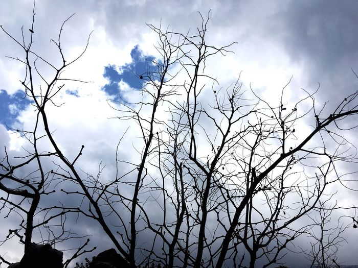 Rami contro il cielo Sky Low Angle View Plant Tree Cloud - Sky Nature Beauty In Nature No People Day Silhouette