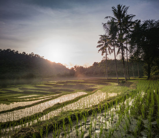 Field Agriculture Rural Scene No People Landscape Tranquility Tree