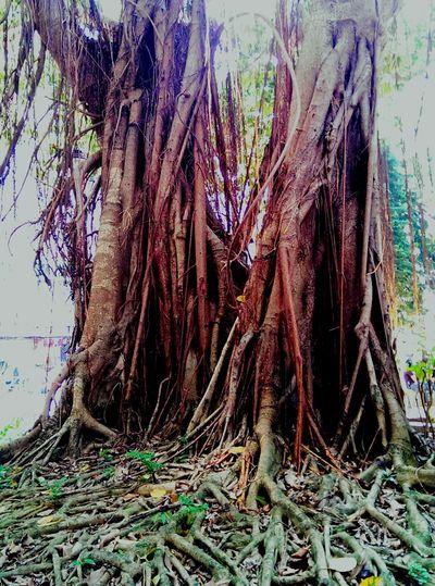 TreePorn Streetphotography EyeEm Best Snapshots  Tree_collection