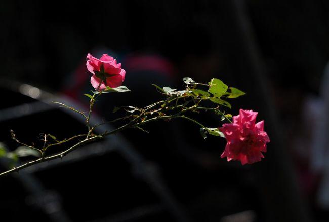 Flowers .... First Eyeem Photo Enjoying The Sun Water Sun Sunset Taking Photos 小花