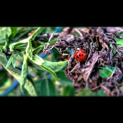 Insects  Nature Spring Ladybug Pittston Pennsylvania