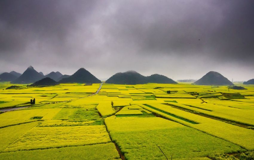 Canola field, rapeseed flower field with the mist in Luoping, China Luoping Rain Rapeseed Field Aerial View Agriculture Beauty In Nature Canola Canola Field Day Farm Field Fog Hill Landscape Mist Mountain Mountain Range Nature No People Outdoors Rapeseed Oil Rapeseed Yellow Tadaa Rural Scene Scenics Sky Tourism Tranquil Scene Tranquility Village