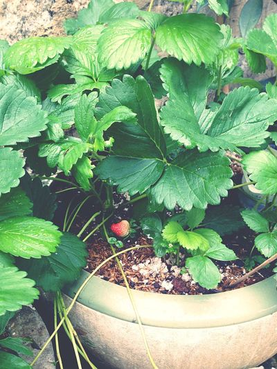 I like a garden that fill by strawberry :)