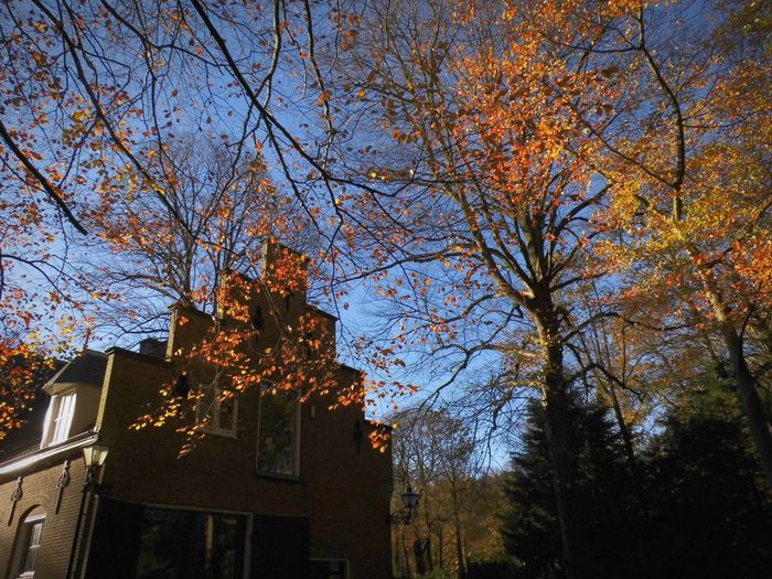 Low angle view of trees and building against sky during autumn