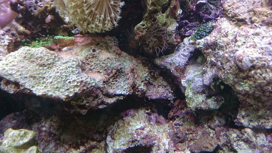 UnderSea Backgrounds Full Frame Textured  Close-up Plant Clown Fish Reef Soft Coral School Of Fish Underwater