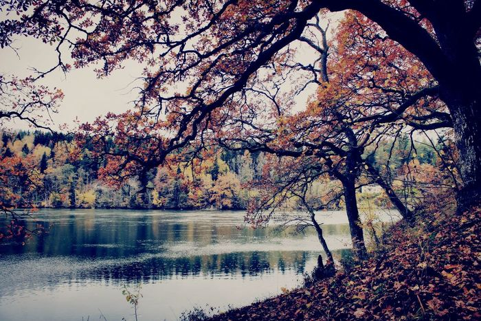 Tree Nature Beauty In Nature Tranquility Lake Tranquil Scene Outdoors Growth Landscape Scenics No People Branch Sky Swedish Nature Water Day Reflection Autumn🍁🍁🍁 EyeEm Selects Creative Photography Art Is Everywhere Tree_collection  Mood Captures Fine Art Photography Imagination Is Everything