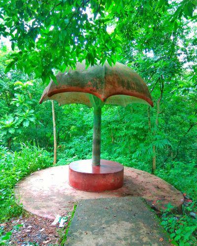 A pisce of heven. Umbrella☂☂ Green Color Day Tree No People Beauty In Nature Umbrella☂☂ Umbrella Bangladesh Nopeople Bangladesh 🇧🇩 Outdoors Nature